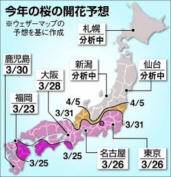霸王寒流效應 打亂日本櫻花預報