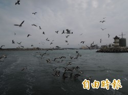 鷗鳥齊聚台中海域 出海賞鳥樂