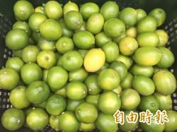 檸檬價低血本無歸 果農痛哭:下輩子再也不當農民