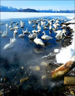 日北海道 天鵝會泡湯