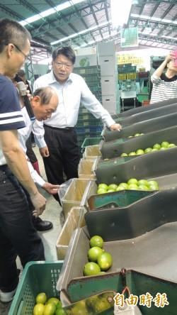 檸檬價格低迷 屏縣啟動外銷機制