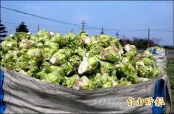 四川菜農叫苦 每分地歉收千餘斤