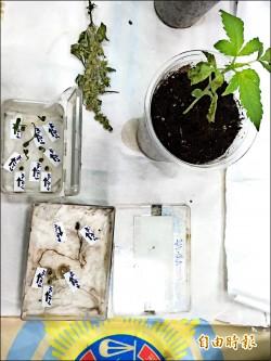 國中學歷自譯苦讀…為了種大麻