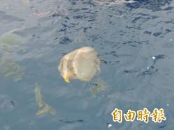 綠島燕魚群消失   保育人士發起守護行動