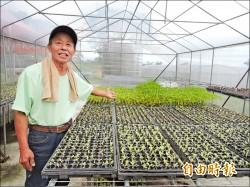 種有機蔬菜訣竅 羅國樑︰先育苗