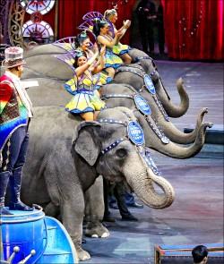 動保意識抬頭 美百年大象秀謝幕