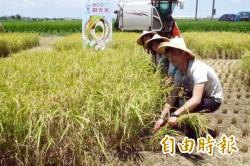 青農體驗割稻 感受來自土地的幸福味道…