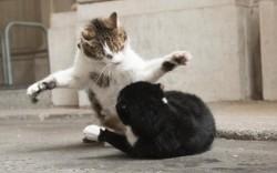 最新協商方式? 英國捕鼠官當街互毆!