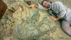 玻利維亞發現巨大恐龍腳印 創南美紀錄