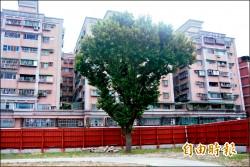 樹林藝文綜合大樓開工 保留老樹