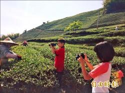 茶園變教室 樟湖國中小賣無毒茶葉