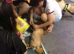 中國寵物展人潮擠爆 酷熱天氣帶狗排隊2犬中暑身亡