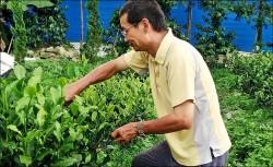 國中老師憂食安 自然農法種紅茶