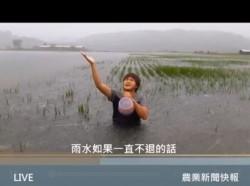 他泡在稻田泳池拍片 告訴你花蓮玉里農田受損有多嚴重