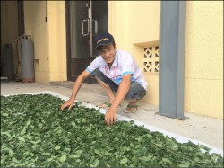 製茶35年 林文王包種茶奪冠