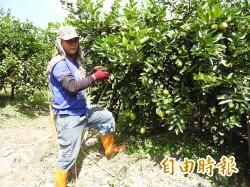 福龜休閒農業區推無毒農業「雷夢兄弟」成亮點