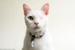 瞎眼小貓找一個家 攝影師這樣幫牠們