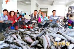 竹北「尚青」烏魚 今天開賣