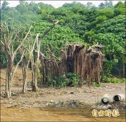 滬尾藝文休閒園區 大榕樹遭修剪過當 開罰