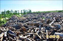 風災逾萬噸廢樹枝 環署允補助破碎機