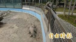 頑皮世界動物園科摩多龍上演床戲  遊客稱奇