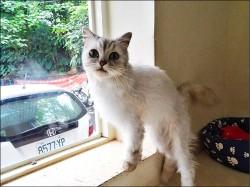 寵物貓沒登記 北市首開萬元罰單