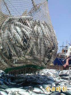 南方澳鯖魚豐收、價格慘跌 漁民叫苦