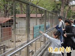 連假首日高雄雨停了 壽山動物園人潮來了