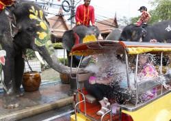 泰國新年 人象潑水戰