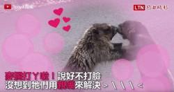 土撥鼠大路邊上演「世間情」? 結局卻超級有愛