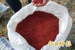 滯銷? 萬丹農會紅豆契作面積明年減至30公頃