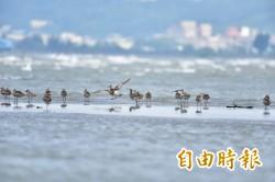 賞鳥平台再升級 新竹南港賞鳥區打造親子觀鳥平台