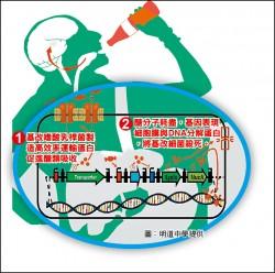 研發會吃糖益生菌 減少糖分攝取 高中生奪MIT金牌獎