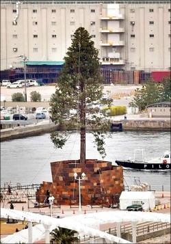 逾30公尺高 神戶推「世界第一」耶誕樹