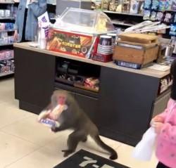 獼猴闖超商偷走大亨堡   網友笑:一看就老江湖