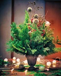 【噹啷女孩‧生活好好】屬於耶誕節的那棵樹