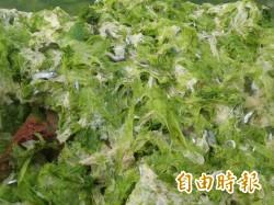澎湖海菜減產 澎科大研究發現不當採收方式造成