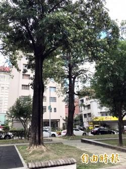 處理問題黑板樹 中市府明年新設回收再生工廠