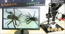 讓蚊子不孕 台南防治登革熱出絕招