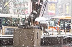 暌違近4年 東京發布大雪警報