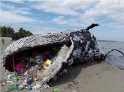 衝擊!  海灘驚見藍鯨「擱淺」  肚裡傾瀉出滿滿的垃圾