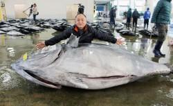 捕獲超大型黑鮪魚!450公斤破勝浦漁港近70年紀錄