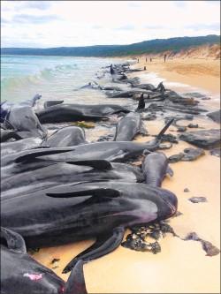 過度捕撈+污染 全球物種消失中