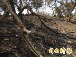 清水鰲峰山清明火警多 燒焦樹木有礙市容