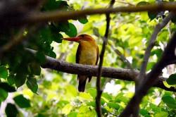 「鳥界法拉利」來訪 台南這個公園聚集上百支「大砲」