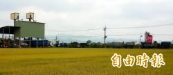 農民搶割 稻價下殺 台南載穀車大排長龍