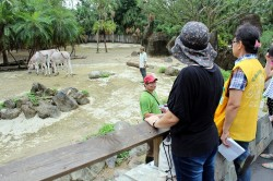 每年僅8天夜間延長開放 北市動物園「動物夏夏叫」7日見