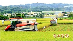 菜價聞「風」再漲一成 稻農排隊搶收割機