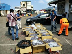 金門貢糖紙箱掩飾 海巡查獲240公斤走私中國香菇