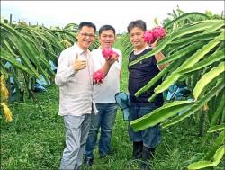 農二代有機栽培 高價火龍果殺出重圍